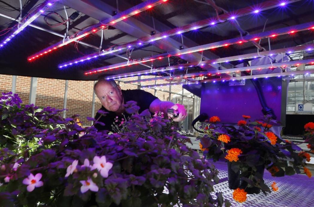 Светодиодное освещение цветов